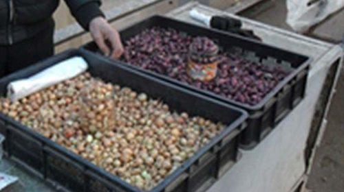 Россельхознадзор выявил нарушения при продаже семян