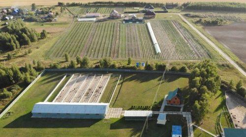 В Ивановской области за 15 млн продают страусиную ферму