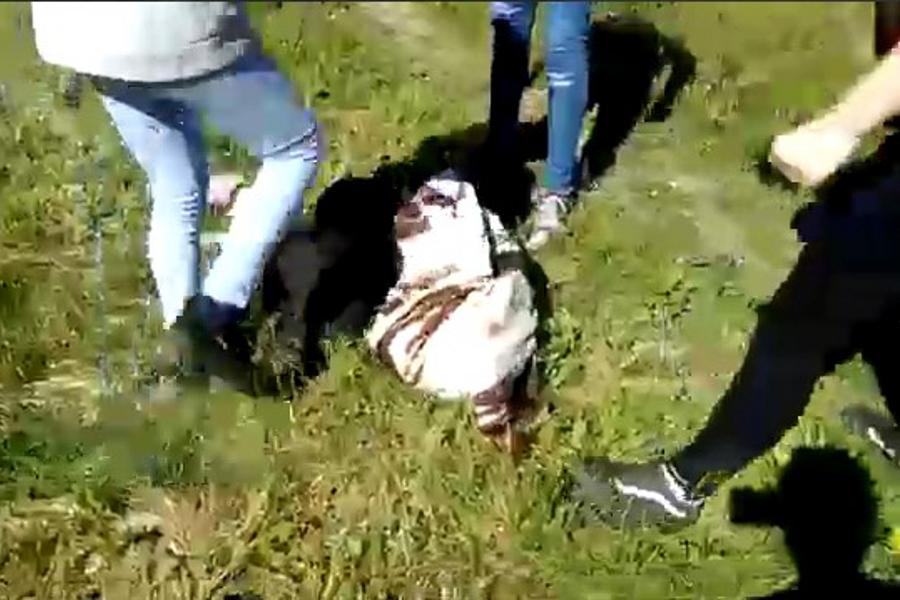 Полицейские в Родниках проверяют избиение девочки-школьницы