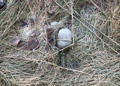 В Кохме нашли гранату: Росгвардия рассказала подробности