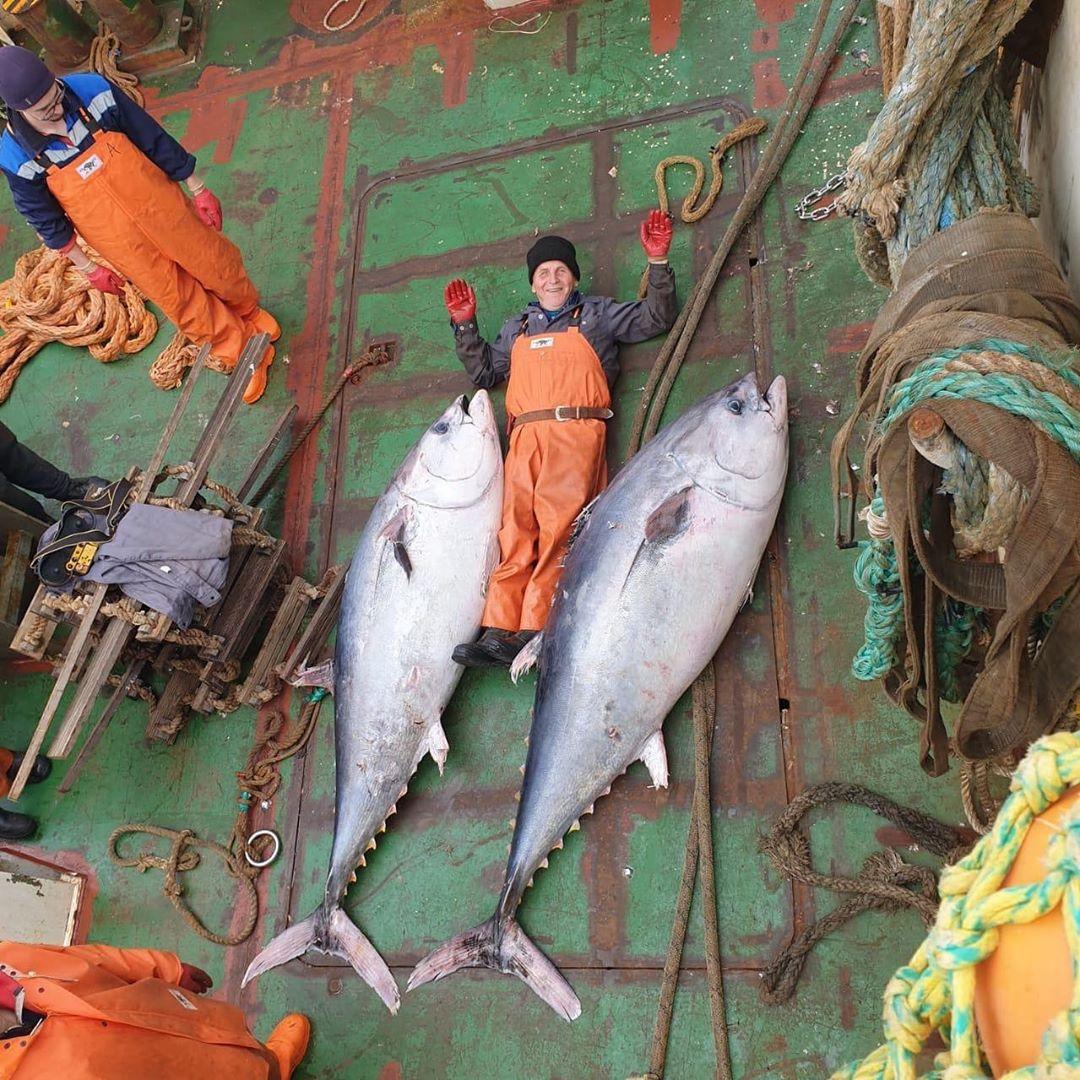 В Росрыболовстве показали 170-килограммового случайно пойманного тунца