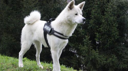 Собака покусала ребенка в Лежневе: мальчик в тяжелом состоянии в городе Иваново