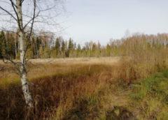В Ивановской области рубят лес: против чиновницы возбудили дело