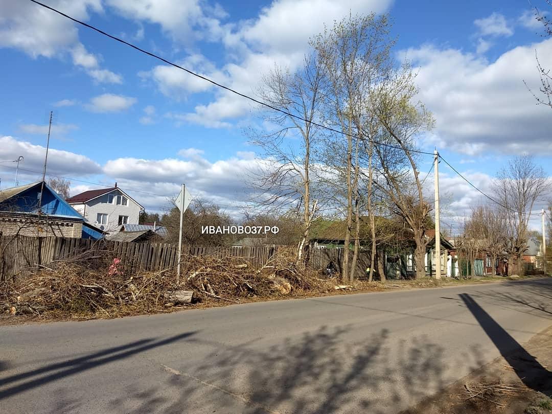 В мэрии зафиксировали незаконную вырубку деревьев на Белова
