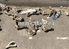 Под Ивановом на видео нашли свалку гниющих костей