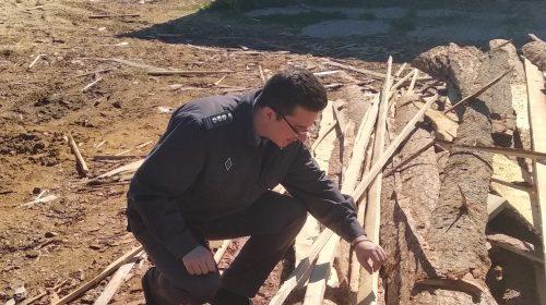 Предприниматель «попал» на штраф в 1000 рублей за отсутствие документов на древесину