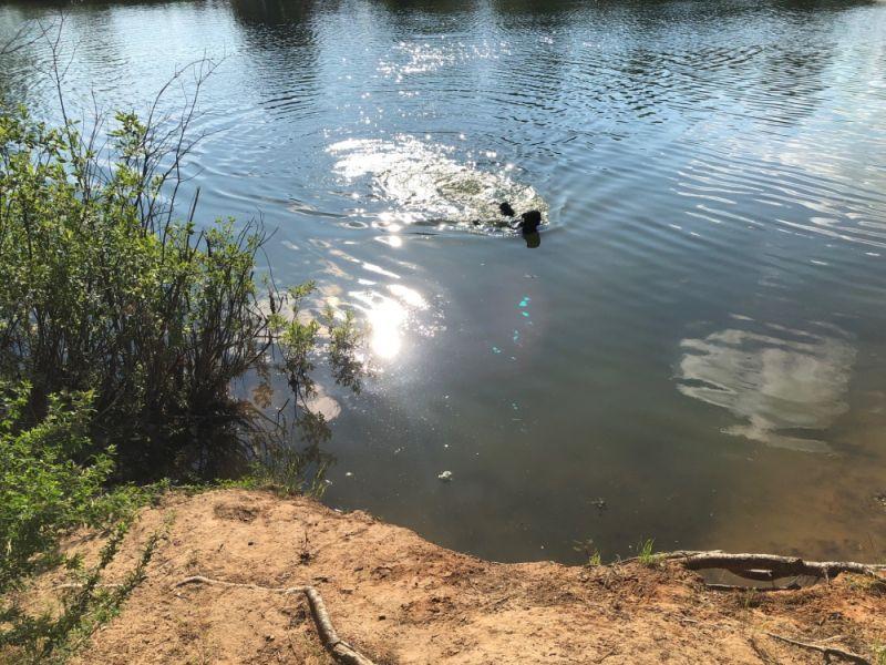 Очередная трагедия на воде – в Кинешме утонул молодой мужчина