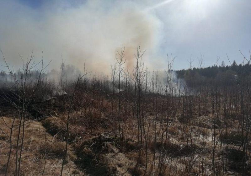 Ивановцев предупреждают о недопустимости выжигания сухой травы