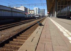 Расписание поезда Кинешма-Иваново: сколько стоят билеты рассказали в РЖД