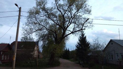 Мэрия пообещала летом спилить опасное дерево на 7-линии