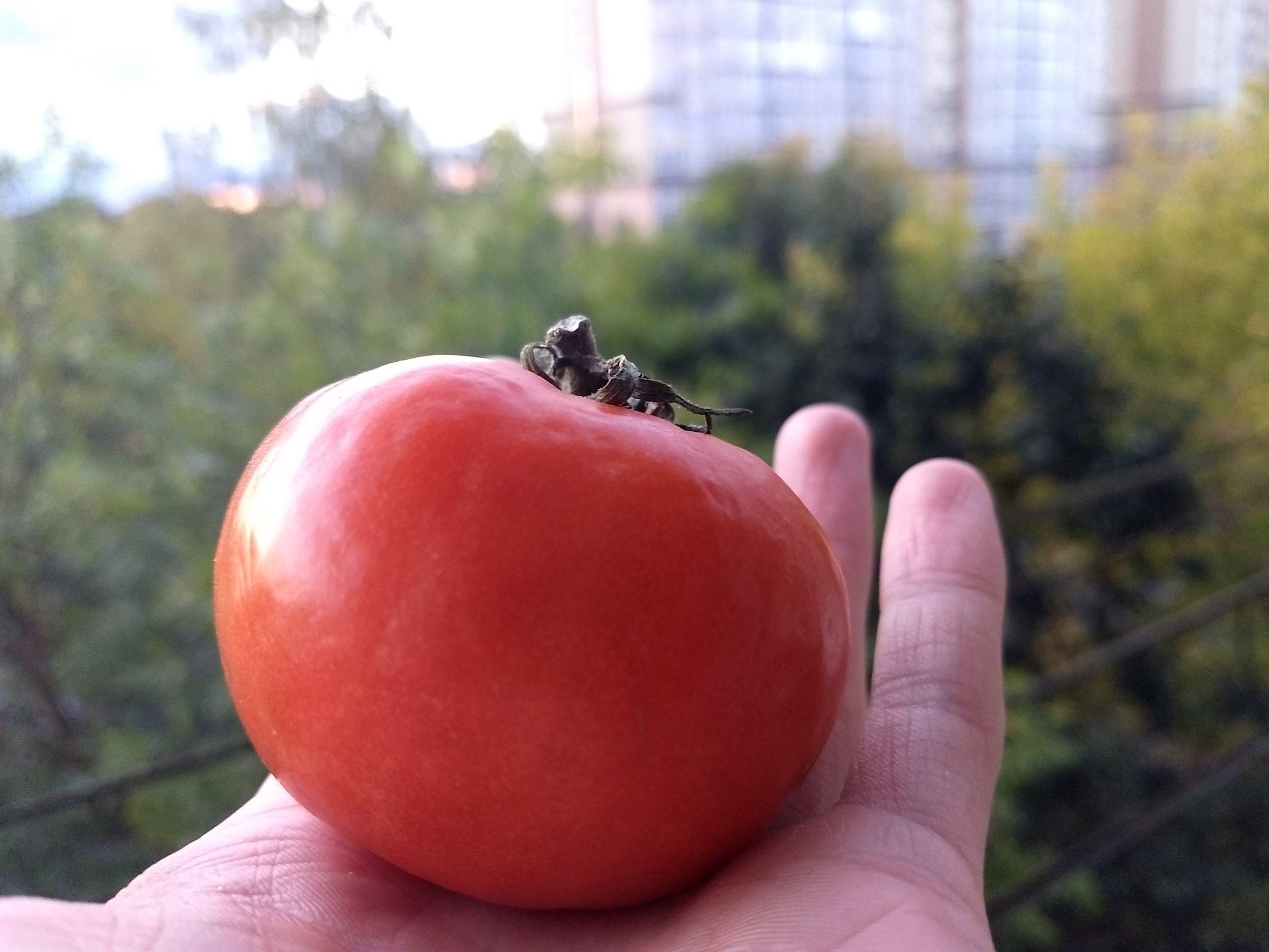 Компания «GidraBox» дала советы по выращиванию растений ценителям гидропоники