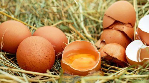 Медицинский центр «Решма» ищет поставщика яиц на полмиллиона рублей