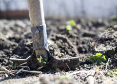 В Тейкове выделили 70 млн рублей на парк «Красные сосенки»