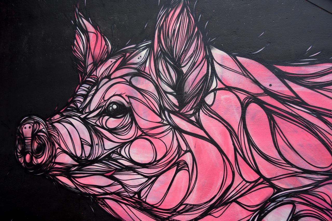 Заболевание «свиным гриппом» регистрируют в Ивановской области