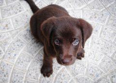 Выявлены некачественные лекарственные препараты для ветеринарного применения