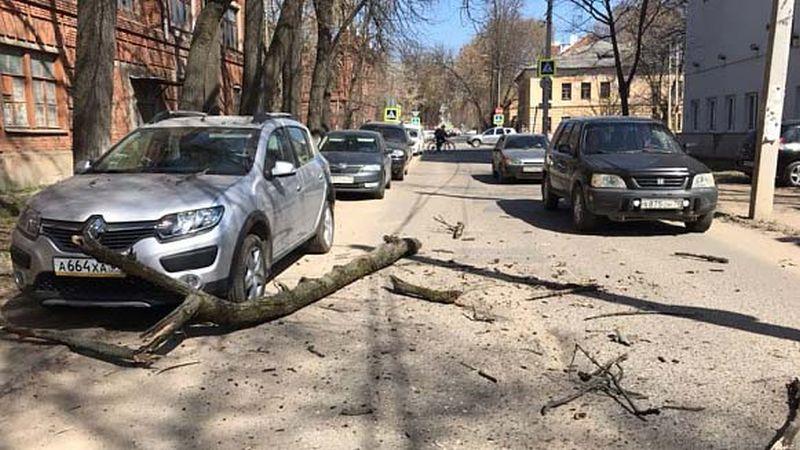 Аварийное дерево в Иванове придавило машину
