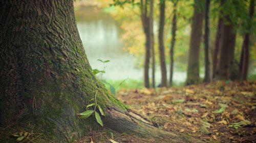 Жительница Верхнего Ландеха найдена в лесу мертвой