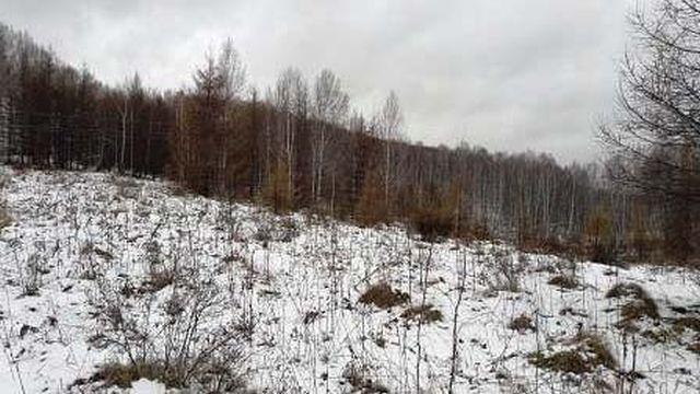 Дачника в Ивановской области оштрафовали на 20 тысяч за брошенный участок
